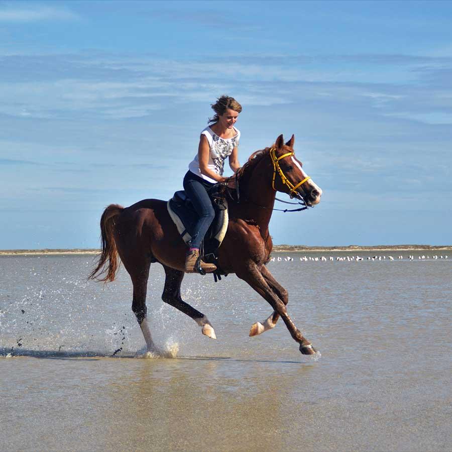 Pferde-Tango-Susanne-Stukenberg