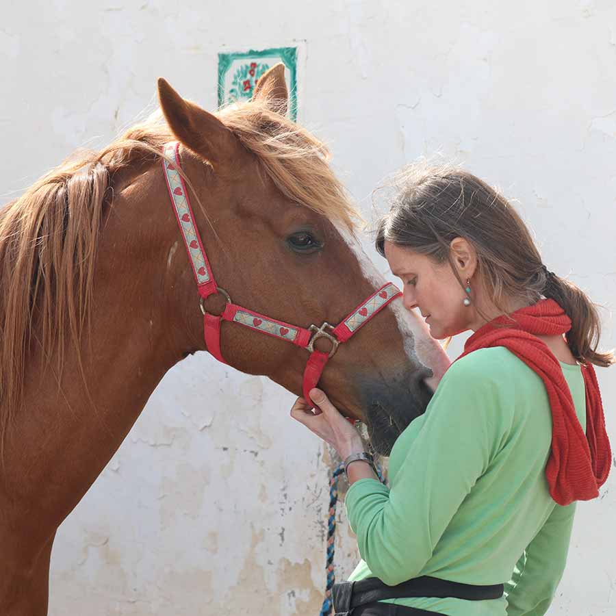 Djerba-Pferd
